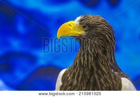 Portrait Of Eagle Or Close Up Eagle