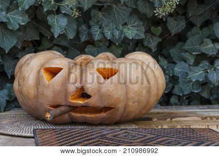 Smoking cigar pumpkin. Halloween. Flowering ivy. Pumpkin with a cigar