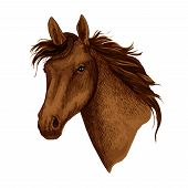 Horse or brown mustang head with wavy mane. Wild equine animal muzzle or racehorse trotter for sport team mascot or stallion for equestrian contest or horse races and exhibition. Vector isolated icon poster