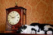 Cat and antique clock poster