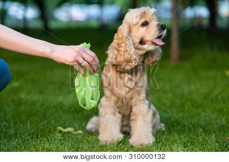 Female Hold Green Plastic Bag With Pet Turds. Picking Up Dog Poop.
