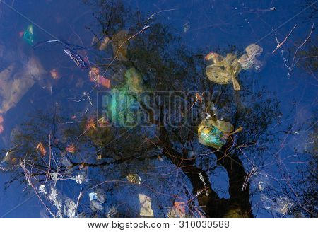 Garbage And Reflection Of The Leafless Trees In Water. Environmental Pollution. Water Pollution.