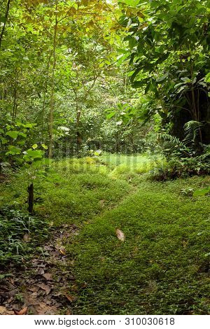 Path In Forest At Niah Caves National Park Miri Malaysia
