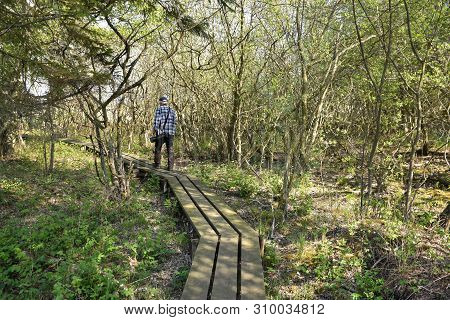 Man Walking On A Wooden Foot-bridge In The Nature Reserve By Djurstad At The Swedish Island Oland