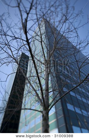 Leafless tree with office buildings