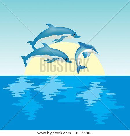 Dolphins On Sunrise