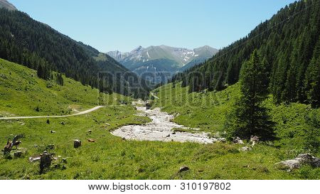 Panoramic View In A Valley With Mountain Forrest Scenery And Cows In The Alps On A Sunny Day With Bl