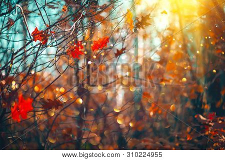 Autumn colorful bright Leaves swinging in a tree in autumnal Park. Autumn colorful background, fall backdrop. Backlit, sun flare. Beautiful nature scene