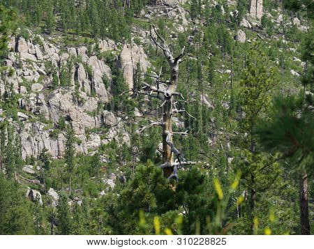 Leafless Tree Standing Up Surrounded By Lush Vegetation With Rock Formations In The Background Along