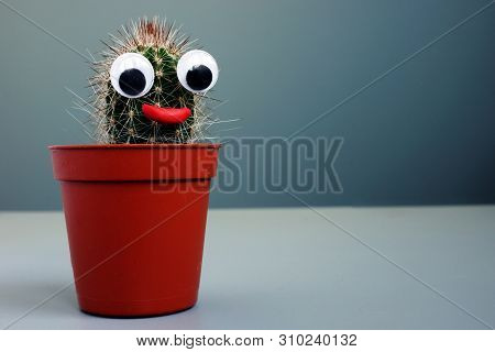 Cactus With Toy Eyes As Face. Weird Funny Background.