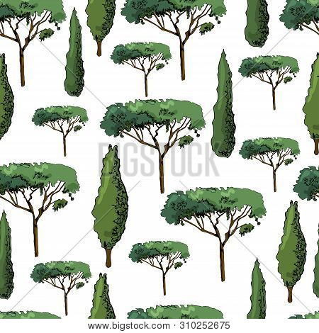 Seamless Pattern With Italian Trees Cypresses And Pines. Ink And Colored Elements Isolated On White