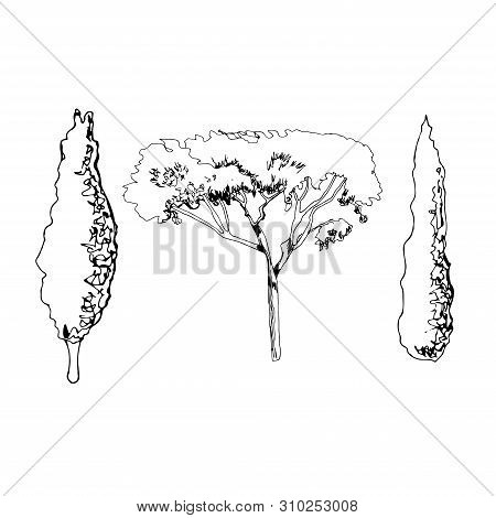 Hand Drawn Sketch Of Italian Trees. Monochrome Objects Isolated On White Background. Vector Illustra