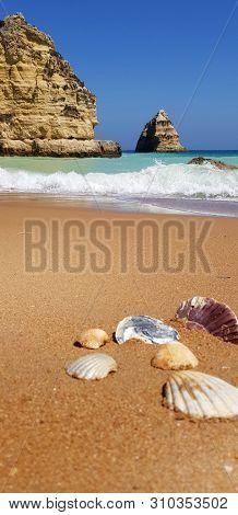 Sea Shells On The Beach In Lagos, Portugal