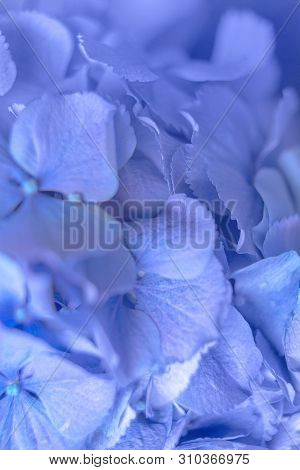Flower Background With Copy Space For Text