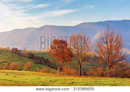 Countryside In Mountains At Sunrise. Grassy Rural Slopes With Fields And Trees In Fall Foliage In Au