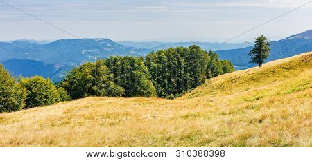 Panorama Of A Grassy Alpine Meadow In August. Beautiful Nature Scenery Near The Beech Forest In Moun