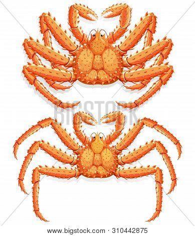 Two Alaskan King Crab Set. Vector Illustration.