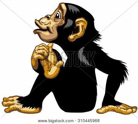 Sitting Cartoon Chimp Great Ape Or Chimpanzee Monkey . Positive And Happy Emotion. Sitting Pose. Sid