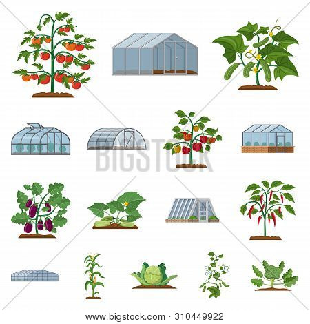 Vector Design Of Greenhouse And Plant Symbol. Collection Of Greenhouse And Garden Stock Symbol For W