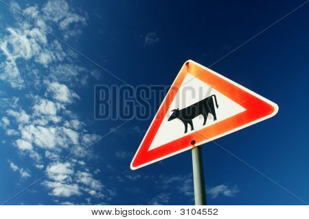 traffic sign showing a cow taken against the blue sky poster
