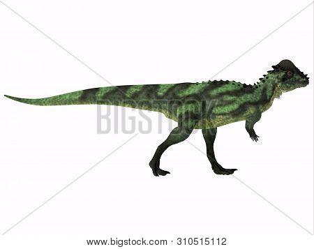 Pachycephalosaurus Dinosaur Side Profile 3d Illustration - Pachycephalosaurus Was An Omnivorous Dino