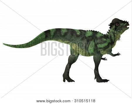 Pachycephalosaurus Dinosaur Tail 3d Illustration - Pachycephalosaurus Was An Omnivorous Dinosaur Tha