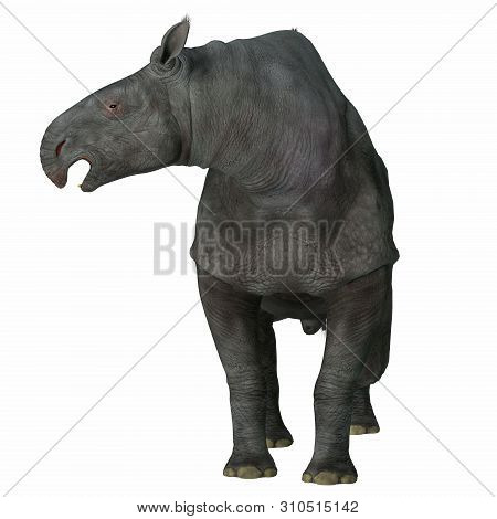 Paraceratherium Mammal On White 3d Illustration - Paraceratherium Was A Herbivorous Mammal That Live