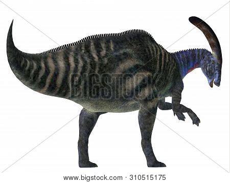 Parasaurolophus Dinosaur Tail 3d Illustration - Parasaurolophus With A Cranial Crest Was A Herbivoro