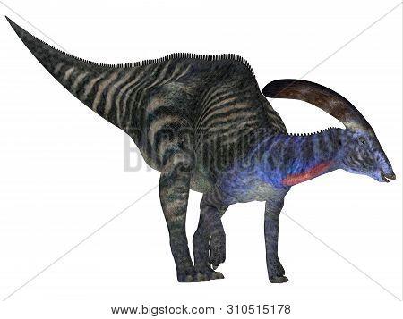 Parasaurolophus Dinosaur 3d Illustration - Parasaurolophus With A Cranial Crest Was A Herbivorous Ha