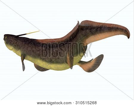 Xenacanthus Shark Tail 3d Illustration - Xenacanthus Was A Carnivorous Marine Shark That Lived In De