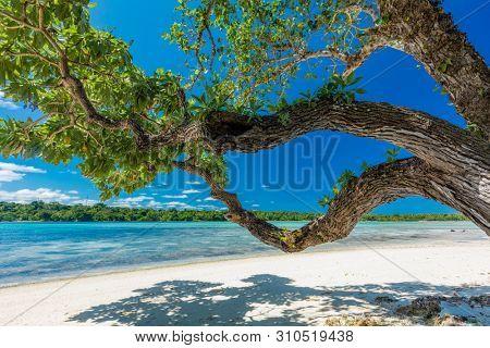 poster of Vibrant Palm trees on a tropical beach, Vanuatu, Erakor Island, Efate