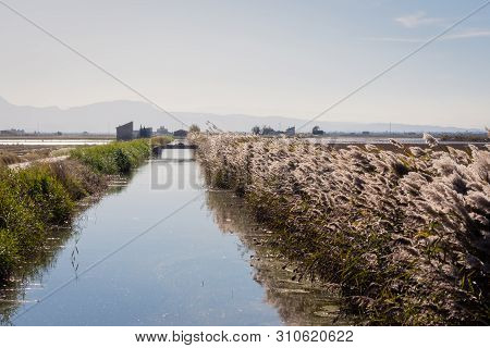 Flooded Fields And Ditches In The Natural Park Of Albufera, Valencia, Spain. The Sunrise Sun In Whic