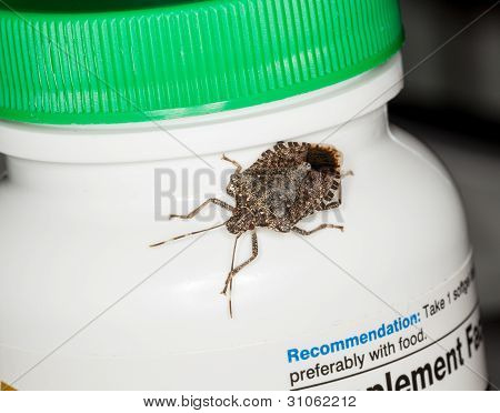 Stink Or Shield Bug On Bottle Of Vitamins