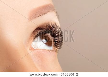 Brown Eye With Beautiful Long Lashes Closeup. Brown Color Eye Lash Extension, 3d Or 4d Volume. Eyela