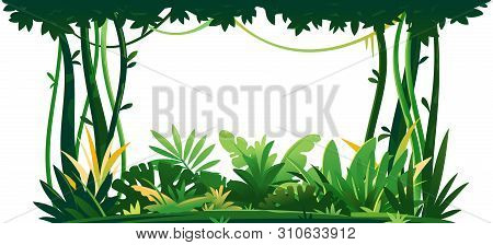 Wild Jungle Forest With Trees, Bushes And Lianas On White Background, Decorative Composition Of Jung