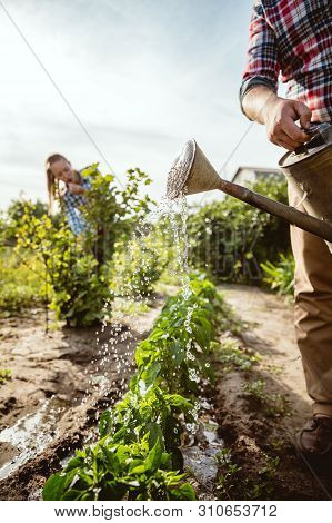 Young And Happy Farmers Couple At Their Garden In Sunny Day. Man And Woman Engaged In The Cultivatio