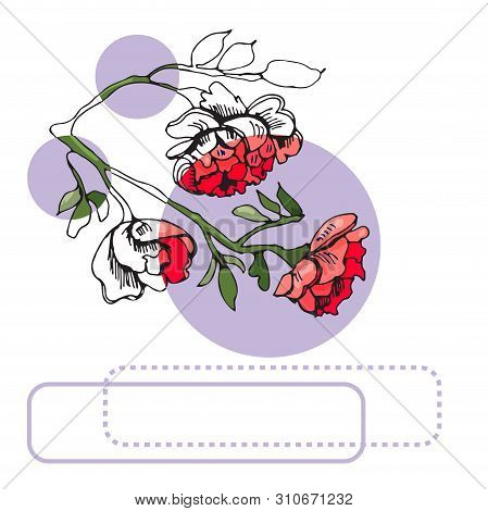 Collection  Of Blossoming Red  Flowers Of Rose, Lilac Circles And Frames. Hand Drawn Ink  And Colore