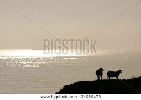 Sunset in the ocean, cliff and two sheep. Cliff and sheep in silhouette. poster