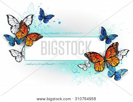 Rectangular Banner With  Blue Butterfly Morpho And Orange Monarch Butterfly On A White Background. M