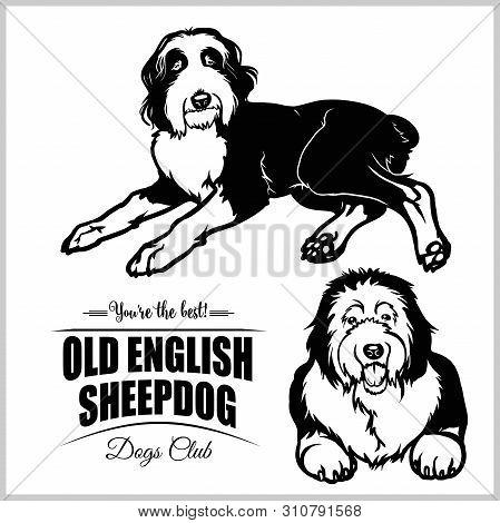 Old English Sheepdog - Vector Set Isolated Illustration On White Background