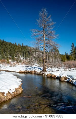 View Of A Creek At Sierra Nevada Donner Lake State Park,  Featuring Snow Covered Ground In The Winte