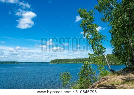 The Steep Bank Of The Uvod River With A Tilted Birch On A Summer Day.