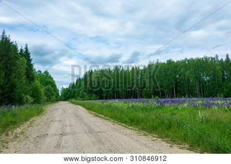 A Wide Forest Road Leading Into A Green Forest And Purple Lupins.