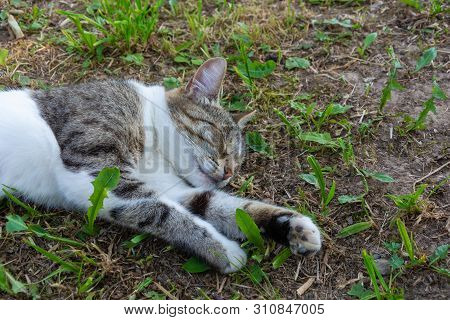Beautiful Sleeping Cat Lying On The Ground With Green Leaves.