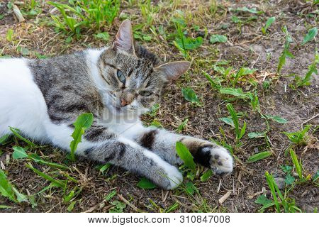 Portrait Of A Beautiful Cat Lying On The Ground With Green Leaves.