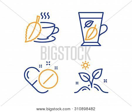 Mint Tea, Mint Leaves And Medical Pills Icons Simple Set. Grow Plant Sign. Mentha Beverage, Mentha L