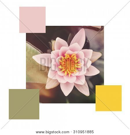 A retro style waterlily in a pond, set with colour swatches and space for text. Colour scheme themed image.