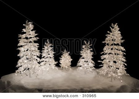 Christmas Trees, Isolated