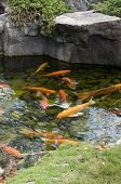 Koi Pond with fish in water and rocks over head. poster
