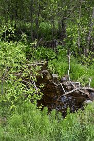 Landscape With Small Brook In Spring Forest.